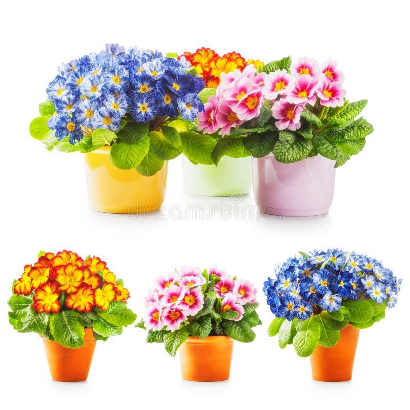 Flores de la primavera de la primavera imagen de archivo libre de regalías