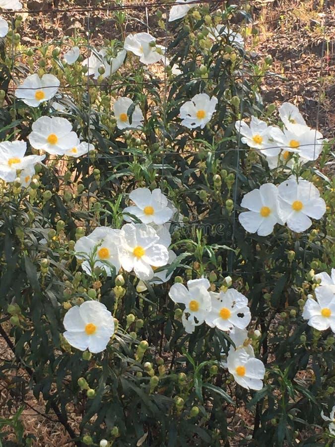 Flores de la primavera en Andalucía foto de archivo libre de regalías