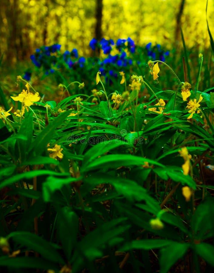 Flores de la primavera en el bosque de la primavera fotos de archivo
