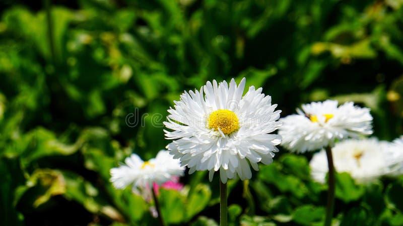 flores de la primavera en el parque de la ciudad fotografía de archivo