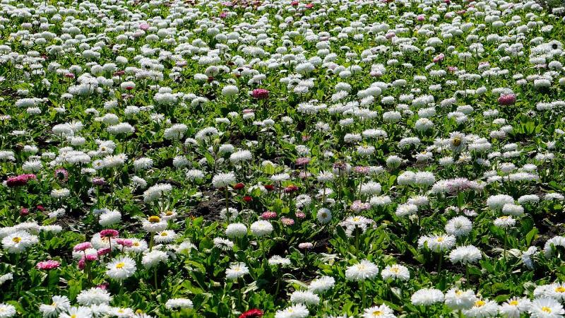 flores de la primavera en el parque de la ciudad imagenes de archivo