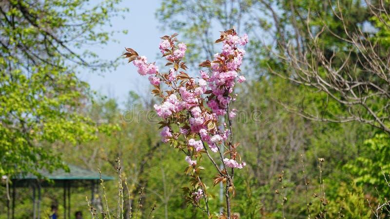 flores de la primavera en el parque de la ciudad fotos de archivo