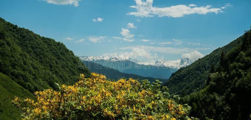 Flores de la primavera en la montaña imagenes de archivo