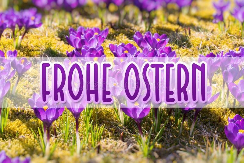 Flores de la primavera en luz del sol Pascua feliz Alem?n-traducci?n: Frohe Ostern fotografía de archivo
