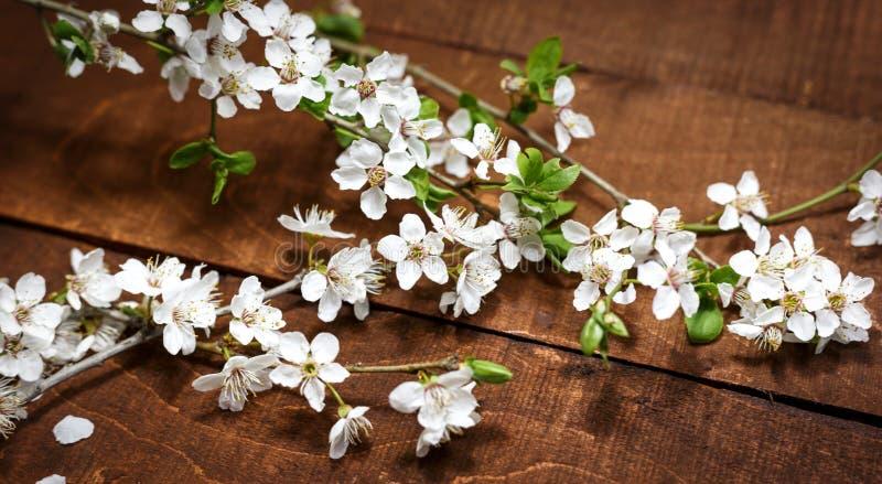 Flores de la primavera en un fondo de madera imagen de archivo libre de regalías