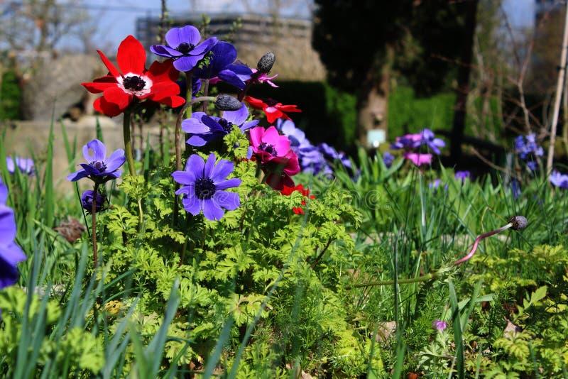 Flores de la primavera, primeras a brotar después de un invierno largo fotos de archivo