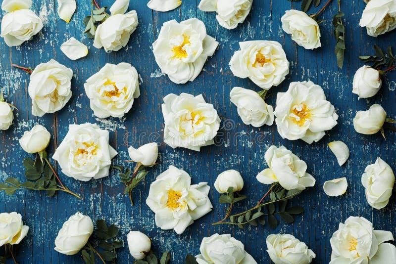 Flores de la rosa del blanco y hojas del verde en fondo rústico azul desde arriba Estampado de flores hermoso en color del vintag foto de archivo libre de regalías