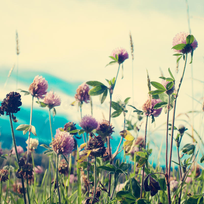 Flores de la vendimia fotos de archivo