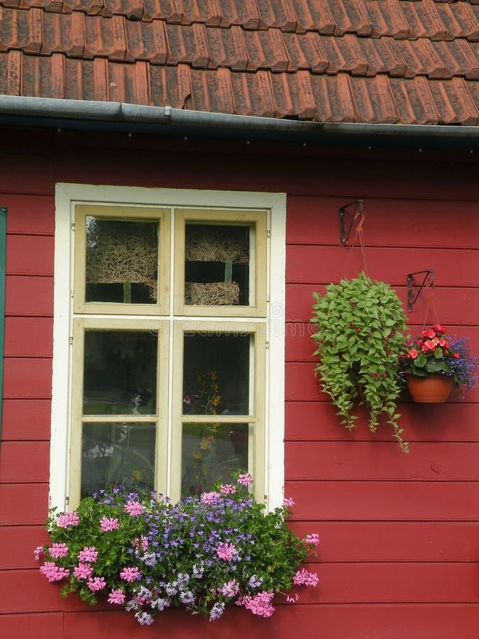 Flores de la ventana fotografía de archivo
