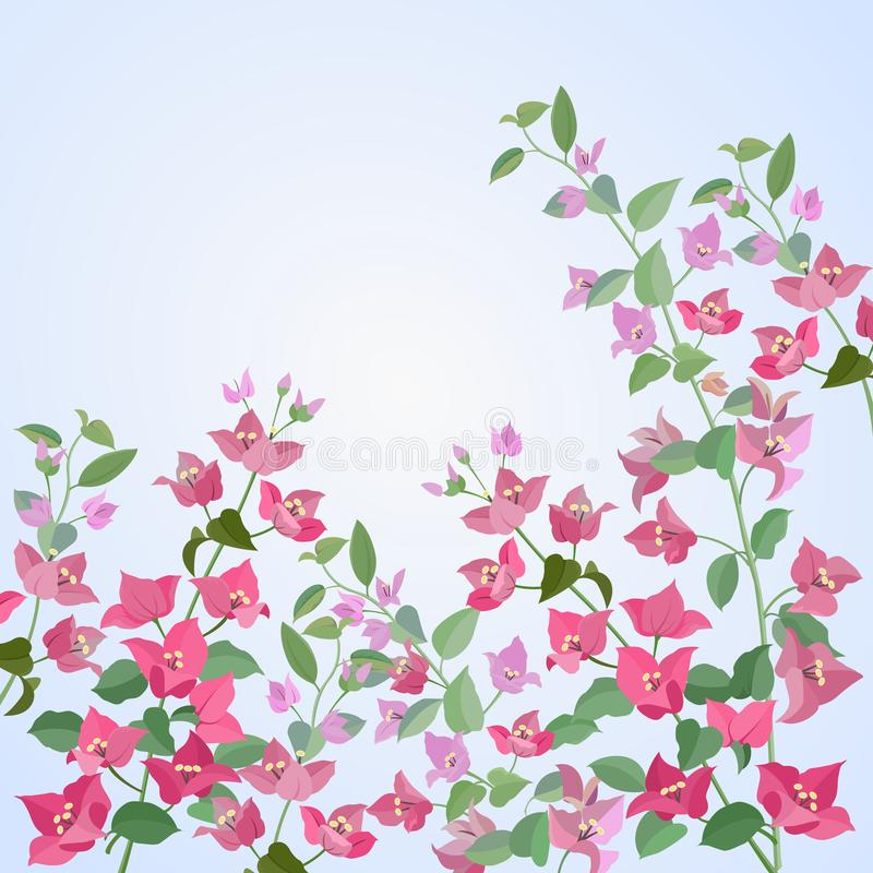 Flores de las buganvillas en diseño azul del vector stock de ilustración