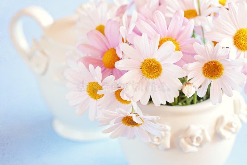 Flores de las margaritas fotos de archivo