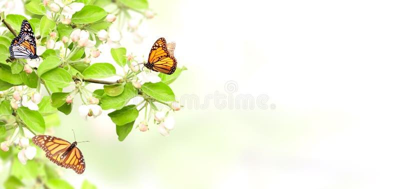 Flores de las mariposas del Apple-árbol y de monarca imagen de archivo libre de regalías