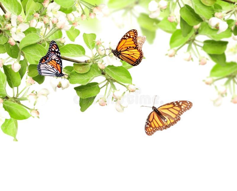 Flores de las mariposas de la manzana y de monarca foto de archivo libre de regalías