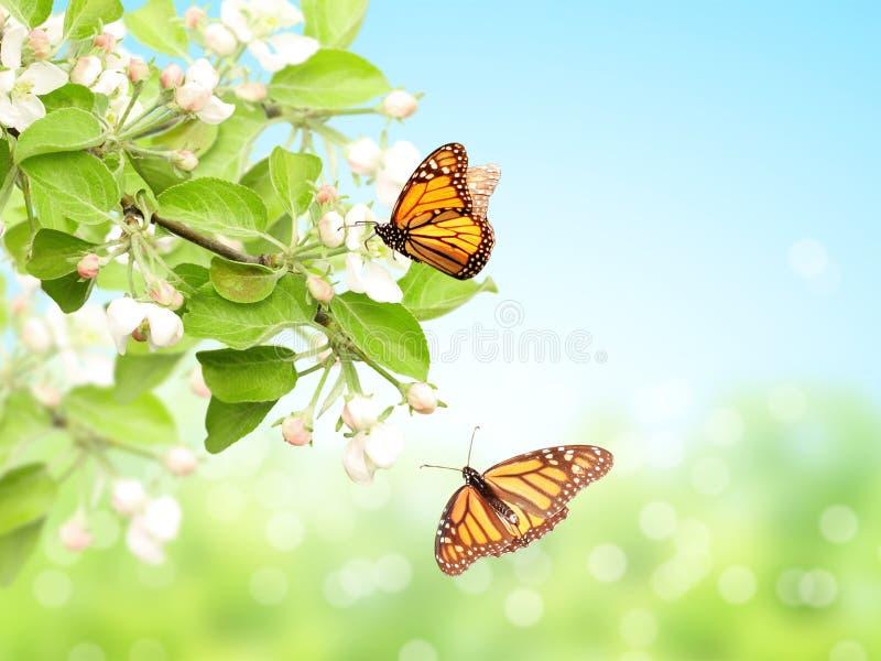 Flores de las mariposas de la manzana y de monarca imagenes de archivo