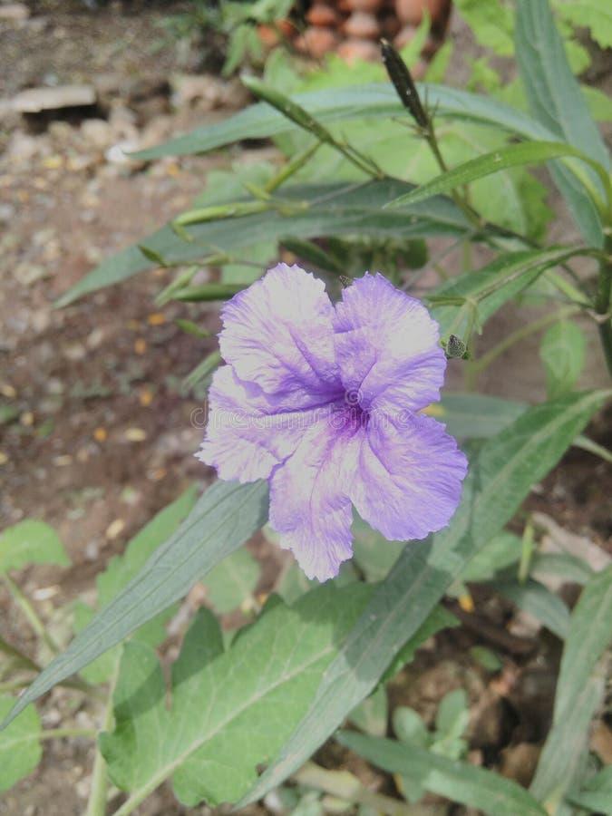 Flores de Lilly fotos de stock royalty free