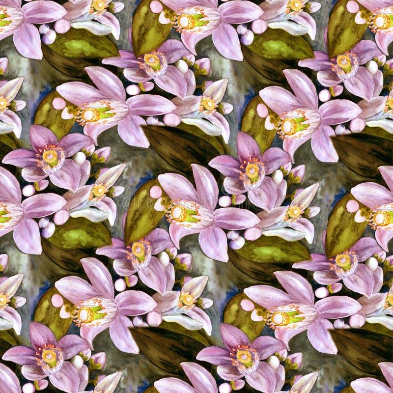 Flores de los árboles de fruta cítrica - limón, naranja, bergamota, cal Gráfico inconsútil del fondo watercolor libre illustration