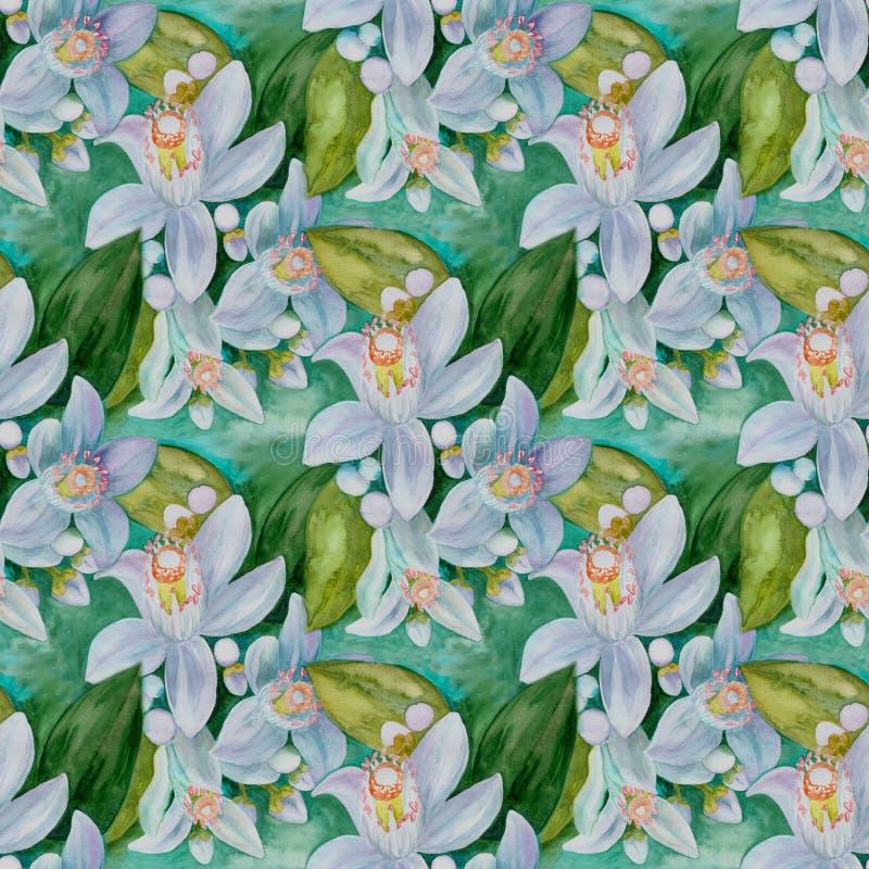 Flores de los árboles de fruta cítrica - limón, naranja, bergamota, cal Gráfico inconsútil del fondo watercolor ilustración del vector