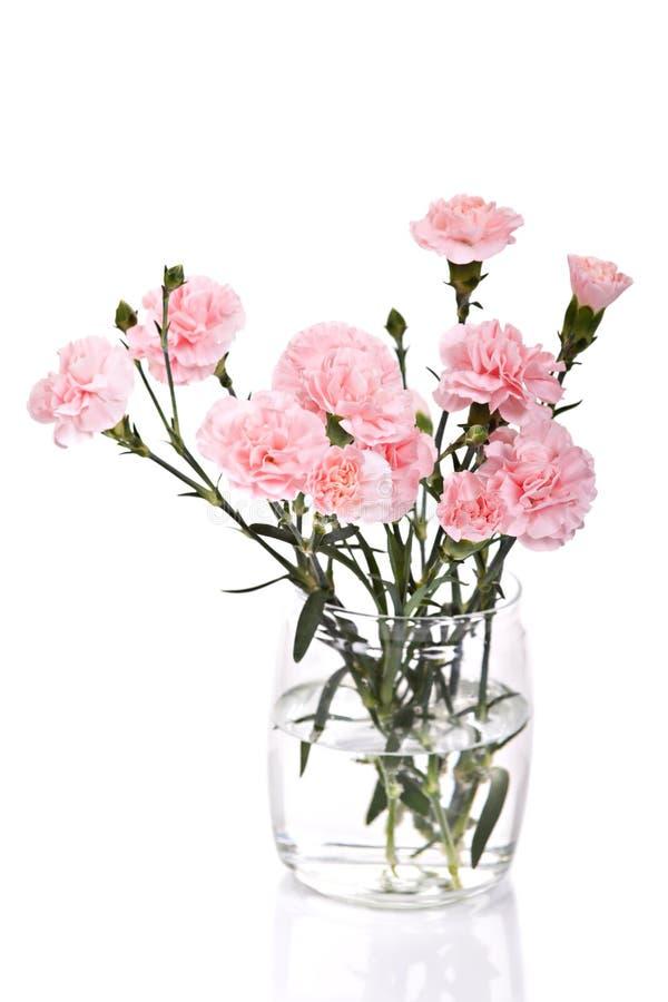 Flores de los claveles imagenes de archivo