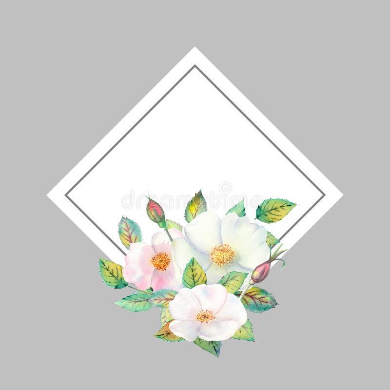 Flores de los escaramujos blancos, frutas rojas, hojas verdes, la composición en un marco de oro geométrico r ilustración del vector
