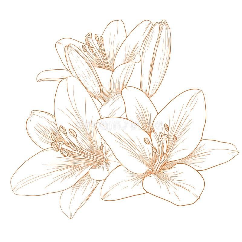 Flores de los lirios del vector. ilustración del vector