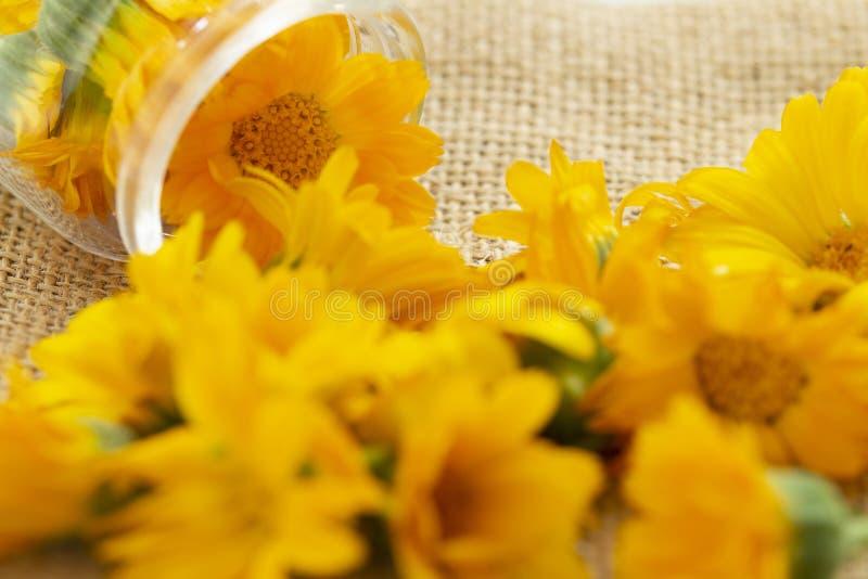 Flores de los officinalis del Calendula del Calendula en un tarro de cristal en un fondo de la harpillera Fondo con el Calendula  imágenes de archivo libres de regalías