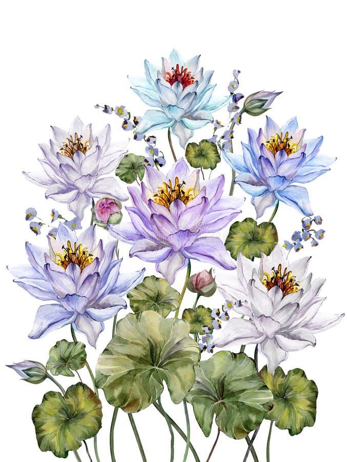 Flores de loto coloridas hermosas con las hojas y los bellflowers en el fondo blanco Fondo floral abstracto Aislado stock de ilustración
