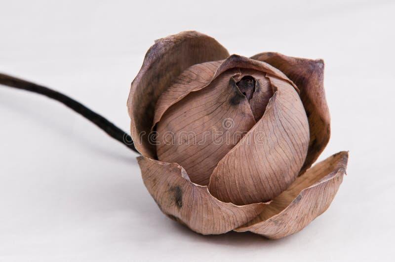 Flores de loto secadas fotos de archivo