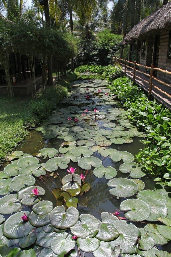 Flores de Lotus em uma lagoa imagem de stock royalty free