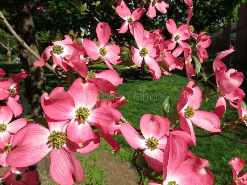 Flores de madeira e erva verde fotografia de stock royalty free