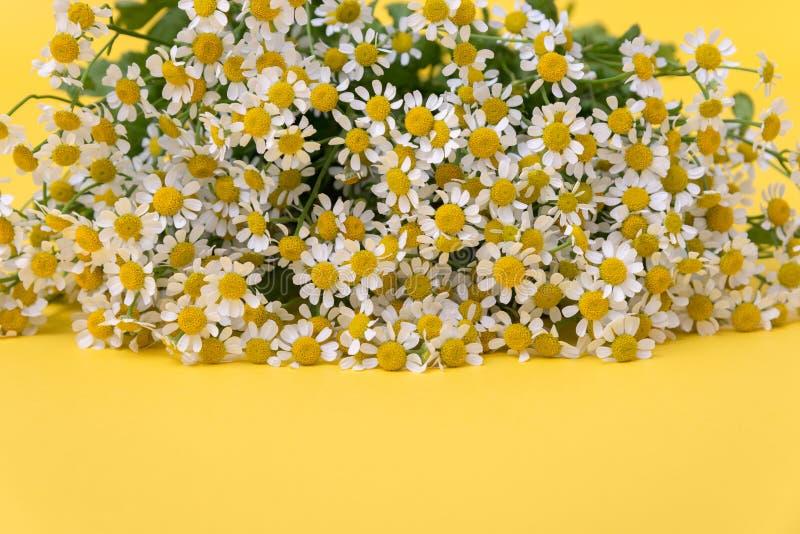 Flores de manzanilla en flor con fondo amarillo fotos de archivo libres de regalías