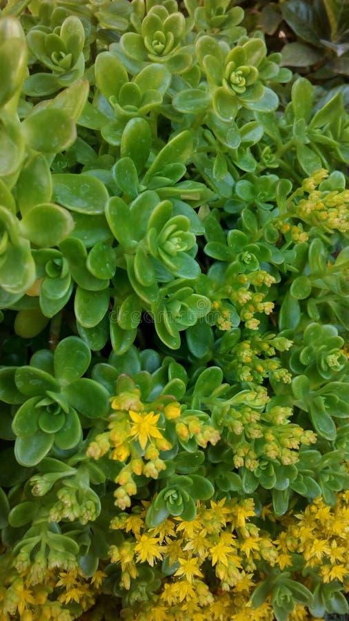 Flores de meu jardim fotografia de stock royalty free