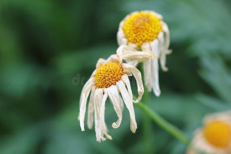 Flores de muerte imagen de archivo libre de regalías