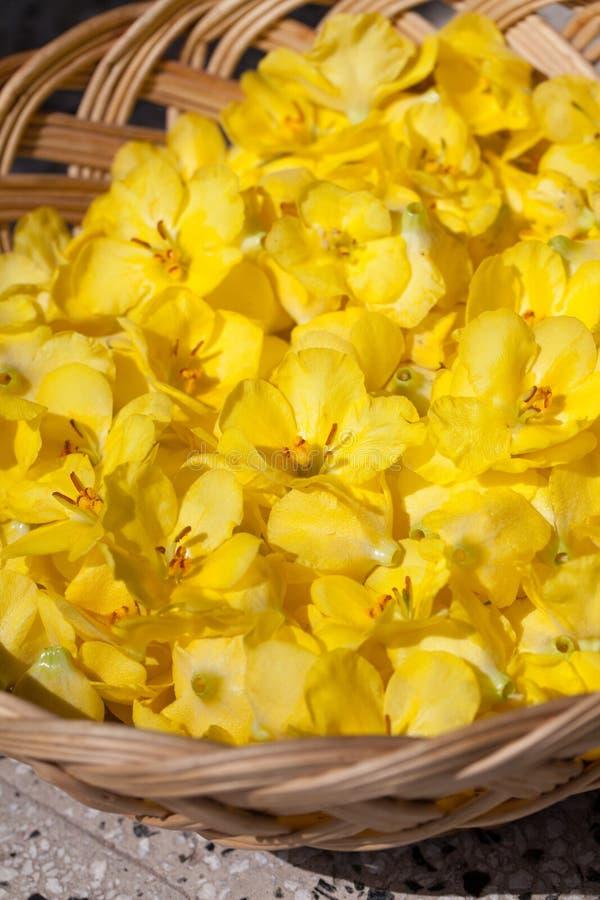 Flores de Mullein en una cesta foto de archivo