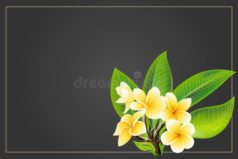 Flores de oro del frangipani o del plumeria con las hojas Postal de la invitación del vector foto de archivo libre de regalías