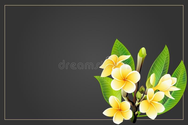 Flores de oro del frangipani o del plumeria con las hojas Postal de la invitaci?n del vector foto de archivo