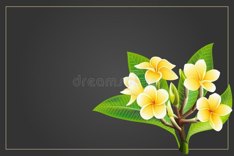 Flores de oro del frangipani o del plumeria con las hojas Postal de la invitaci?n del vector fotos de archivo