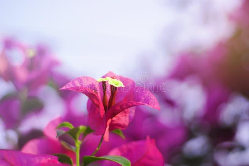 Flores de papel bonitas fotos de stock royalty free