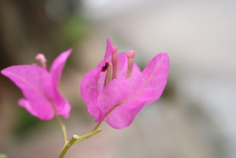 Flores de papel pasadas fotografía de archivo
