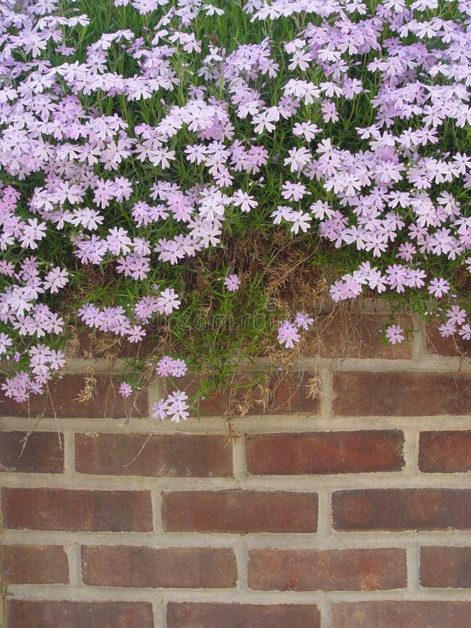 Flores de pared fotografía de archivo libre de regalías