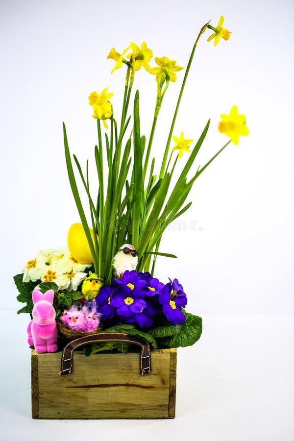 Flores de primavera, arranjos com flores de primavera, miúda, miúda engraçada, coelho de Páscoa, fundo branco foto de stock royalty free
