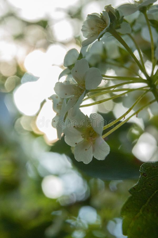 Flores de Primavera lizenzfreies stockbild