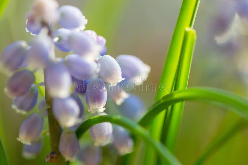 Flores de primavera fotografía de archivo libre de regalías