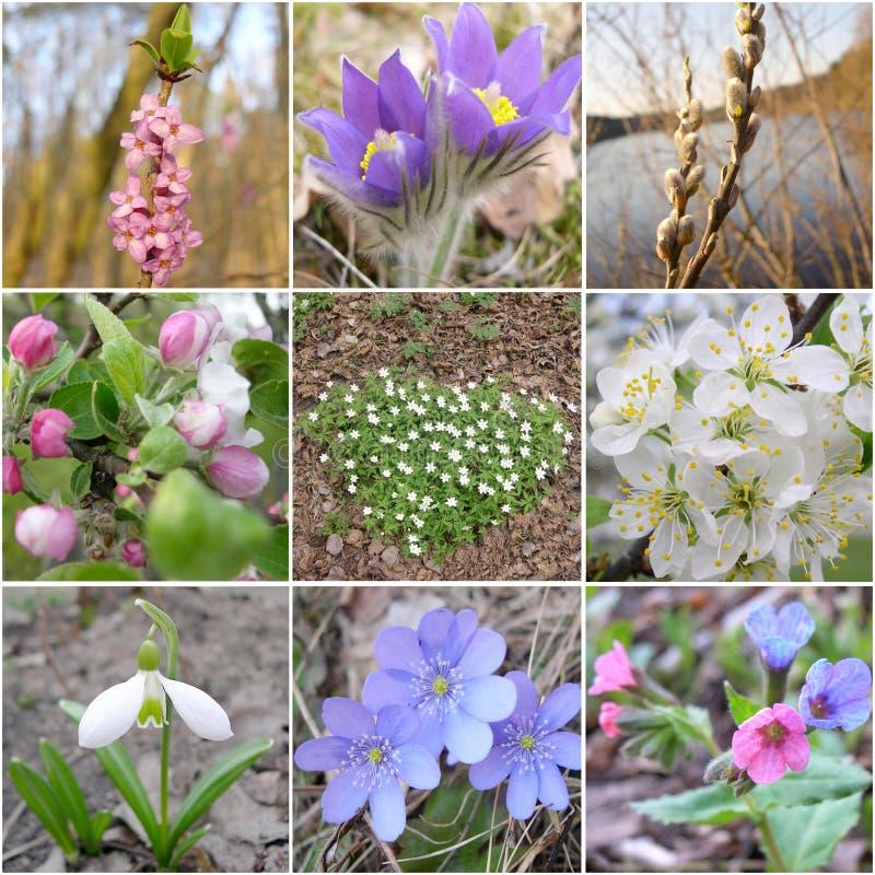 Flores de resortes imagen de archivo