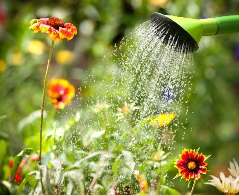 Flores de riego fotografía de archivo