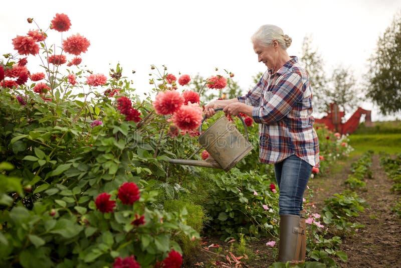 Flores de riego de la mujer mayor en el jardín del verano imágenes de archivo libres de regalías