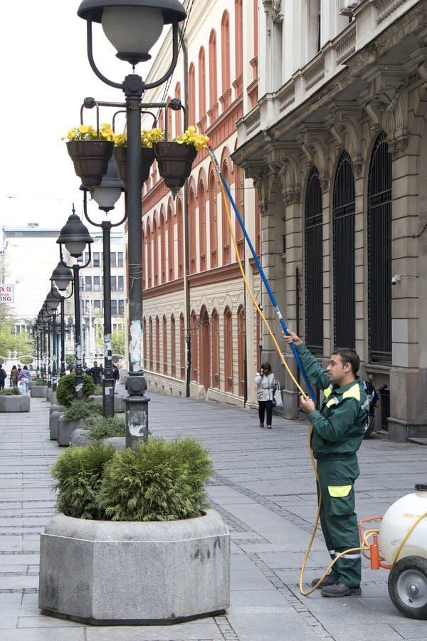 Flores de riego del servicio del verdor de la ciudad en cesta en polos ligeros fotos de archivo