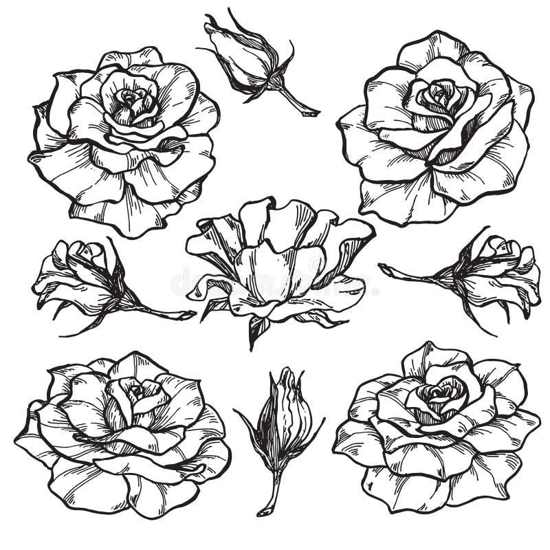 Flores de Rosa ajustadas ilustração royalty free