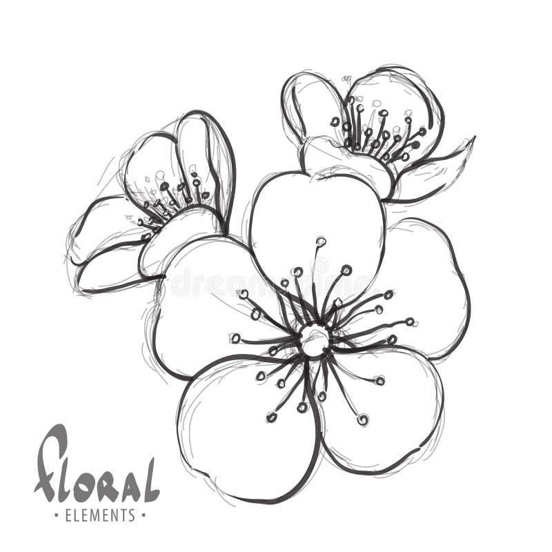 flores de sakura em um fundo branco ilustração do vetor
