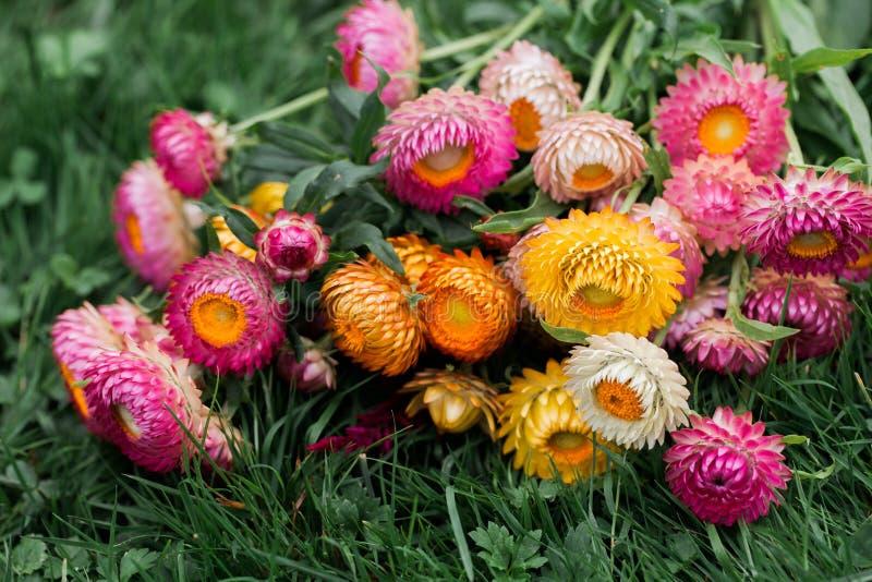 Flores de sequía foto de archivo libre de regalías