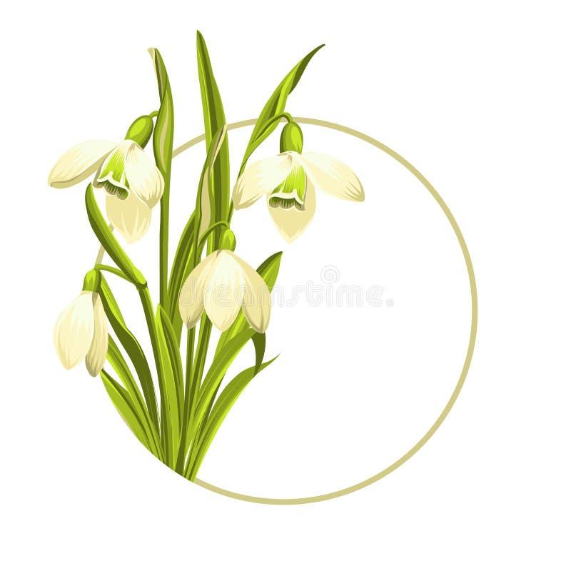 Flores de Snowdrop ilustração do vetor